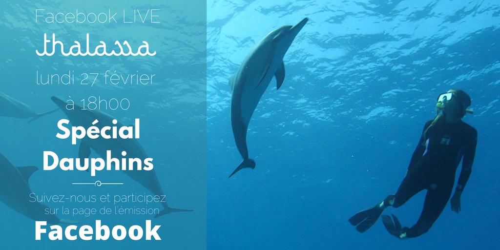 N'oubliez pas le prochain RDV de #Thalassa : en #direct sur #Facebook lundi à 18h pour répondre à vos questions sur les #Dauphins ! #Live<br>http://pic.twitter.com/KDCcg4EqTg