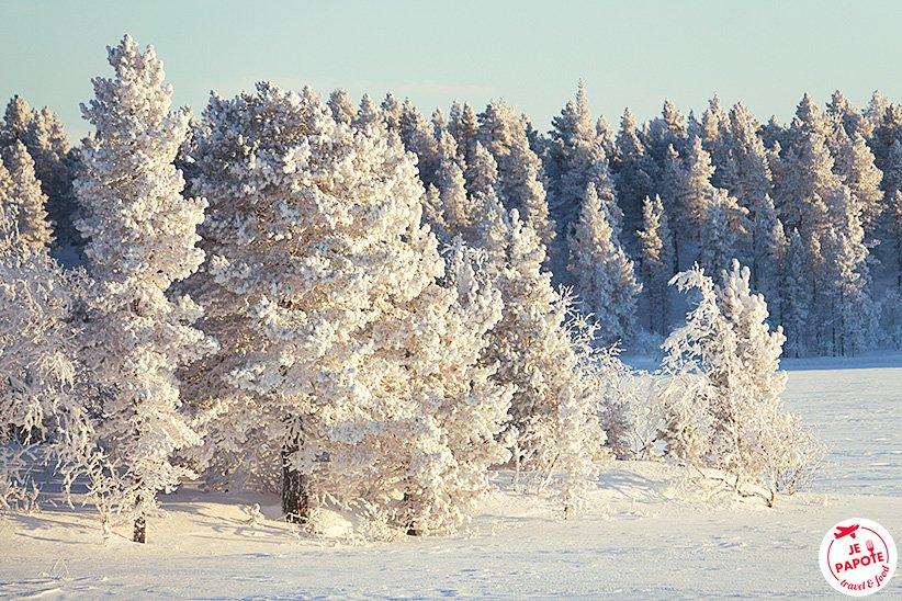 Les arbres en coton  #Laponie #Lapland #hiver #winter<br>http://pic.twitter.com/kAJc0rU7Kf