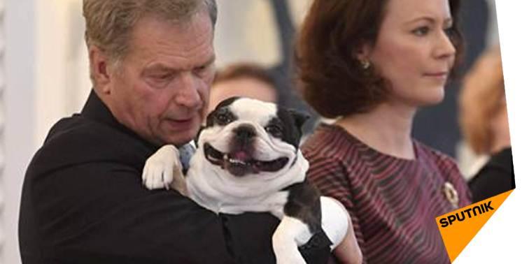 Quand le #chien du #président finlandais devient une #star du #Web &gt;&gt;  http:// sptnkne.ws/dCGy  &nbsp;   #Finlande @niinisto<br>http://pic.twitter.com/ypS9RyzZqZ