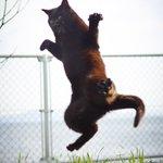 色んな猫を撮るんだけど黒猫だけはなんかポテンシャルが違う… pic.twitter.com/ckJY…