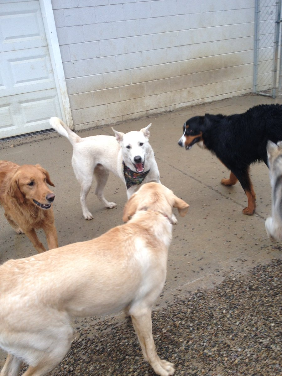 Leif is so happy to be playing with Maggie Mae, Diesel and Zooey on his birthday!