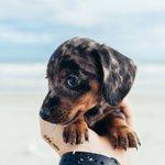 Meet Ash doggo stories