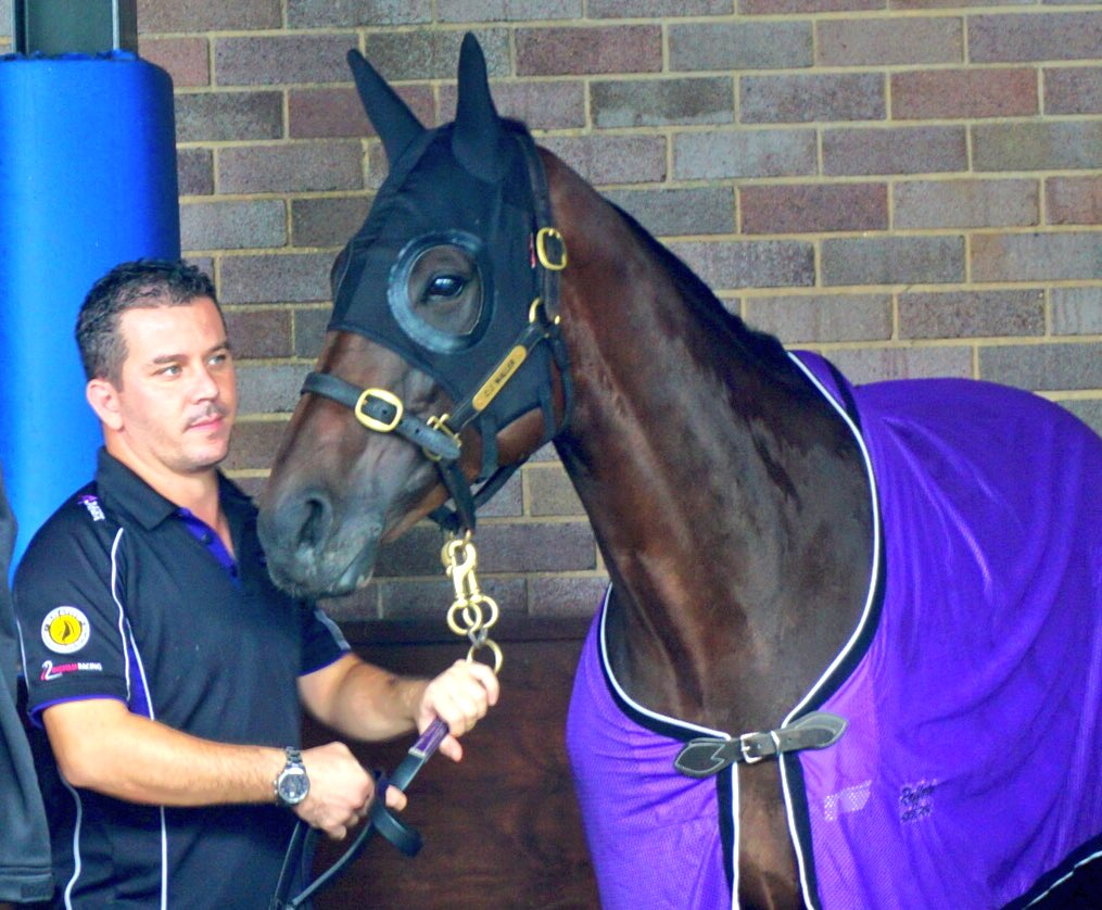 Here's your girl! Winx looking relaxed @royalrandwick #gowinx https://...