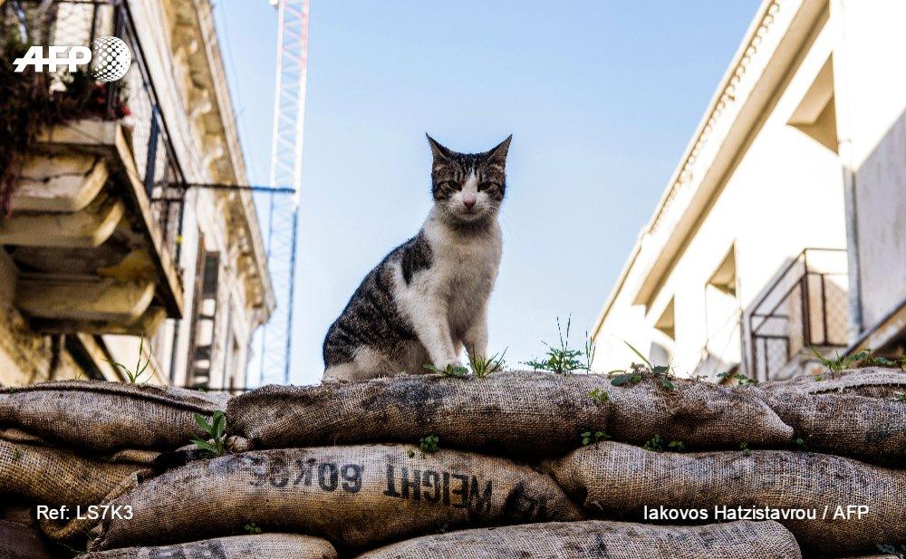 : un chat sauvage tient une barricade sur la Ligne verte à Nicosie, Chypre  photo @iak_hatz #AFP <br>http://pic.twitter.com/jhJ9pQvvfj