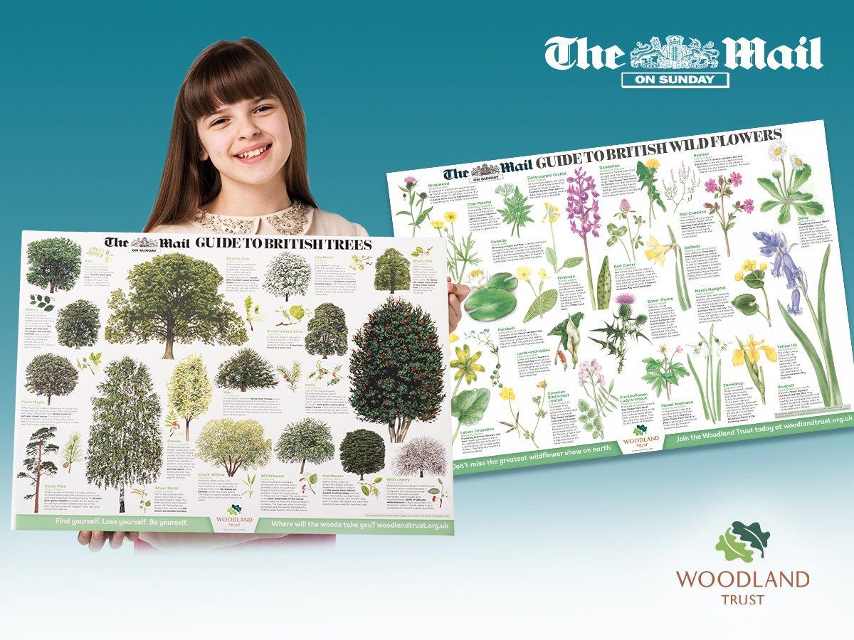 Daily Mail 2 Free Hydrangeas 100 Mixed Alliums