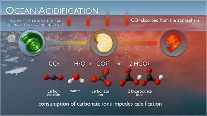 Mythbusting #climate fact: Oceans are absorbing massive amounts of CO2 and becoming more acidic.  https:// skepticalscience.com/co2-coming-fro m-ocean.htm &nbsp; … <br>http://pic.twitter.com/tI5nNMNJ3O