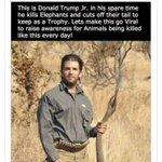 #DonaldTrumpJr #Murderer