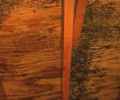#Roofers Tip - Water stains, mold in your attic or moss on your roof can be indications of a #roof issue   http:// local-roof.com  &nbsp;    #newroof<br>http://pic.twitter.com/cV6Msv7Wy7