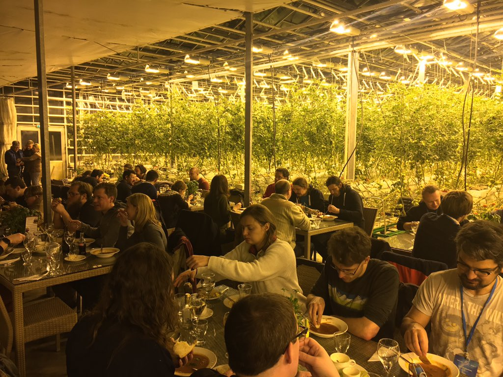 Drupal devs eating together in front of hanging tomato plants in a greenhouse