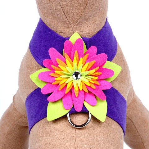 11 colors  http:// ow.ly/Y154309lvEy  &nbsp;   #stylishdog #dogstuff #dogharness #dogs #dogaccessories<br>http://pic.twitter.com/yiYGbhVYce