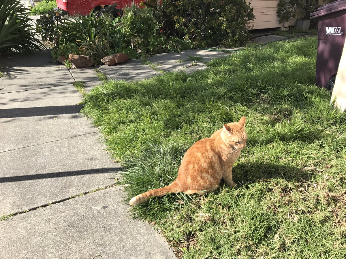 @thecatreviewer Calvin helped me &amp; @DSAEastBay canvass a block in Oakland for #singlepayer healthcare in CA. 15/10 for solidarity/head-rubs <br>http://pic.twitter.com/1rJ1VGjJ94