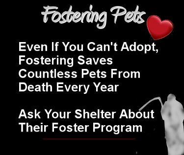 #Fostering Saves Shelter #Pets Lives StepUp~SignUp #Foster #Cats n #Dogs