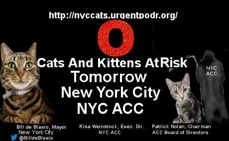 FEB 26th Alert! ZERO #NewYorkCity #Cats @ NYCACC At Risk #Adopt Homeless #Pets #Manhattan #Brooklyn #StatenIsland