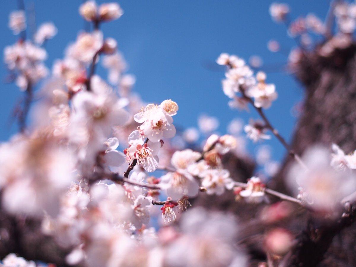 梅林の中は梅の香りでいっぱい