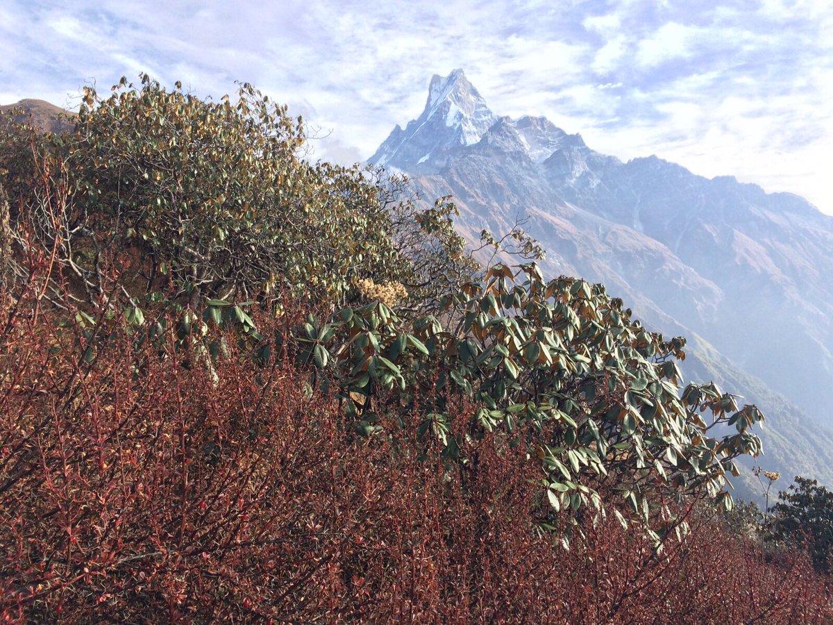 Le Top 10 des plus hauts sommets de la planète :  http:// escaledenuit.com/2015/03/26/top -10-des-plus-hauts-sommets-du-monde/ &nbsp; …  #Himalaya #Top10 #sommet #montagne #Monde <br>http://pic.twitter.com/el6v2LsYlC