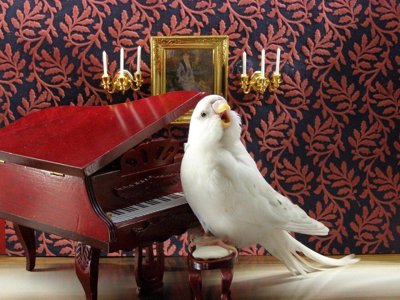 Картинки смешные попугай, гифы мерцающие
