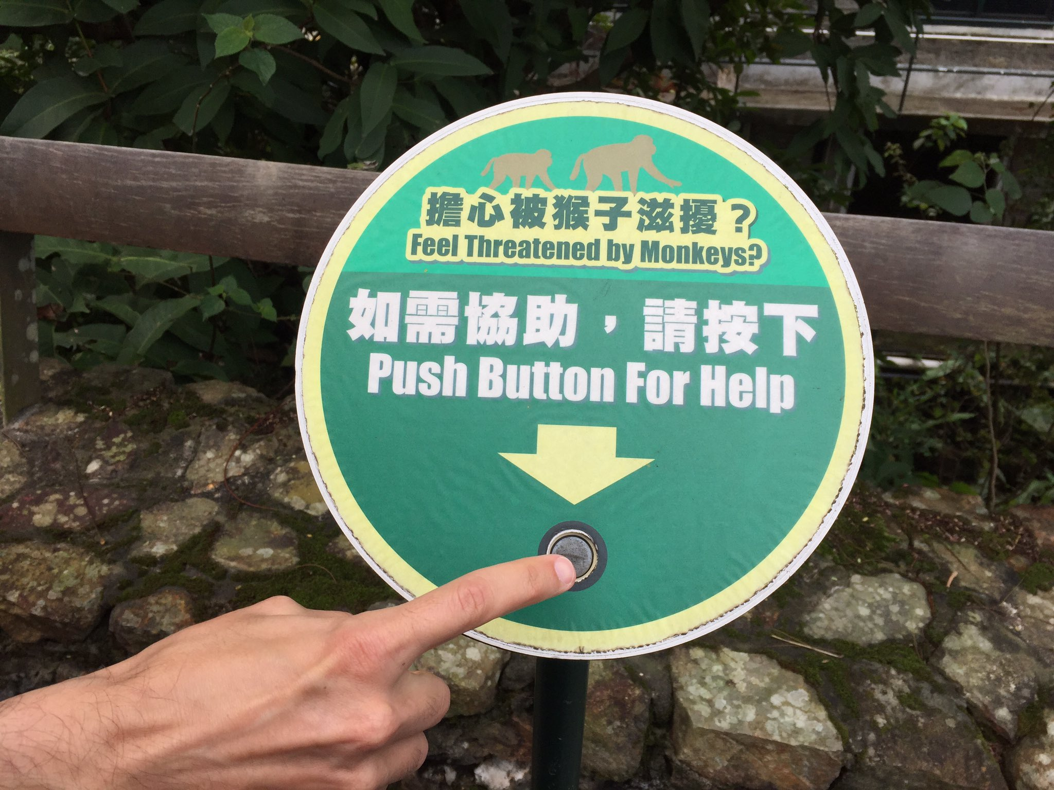 """Feel threatened by monkeys?"" at Kadoorie Farm and Botanic Garden https://t.co/Qc0B70oVeK https://t.co/aNwgApqCfj"