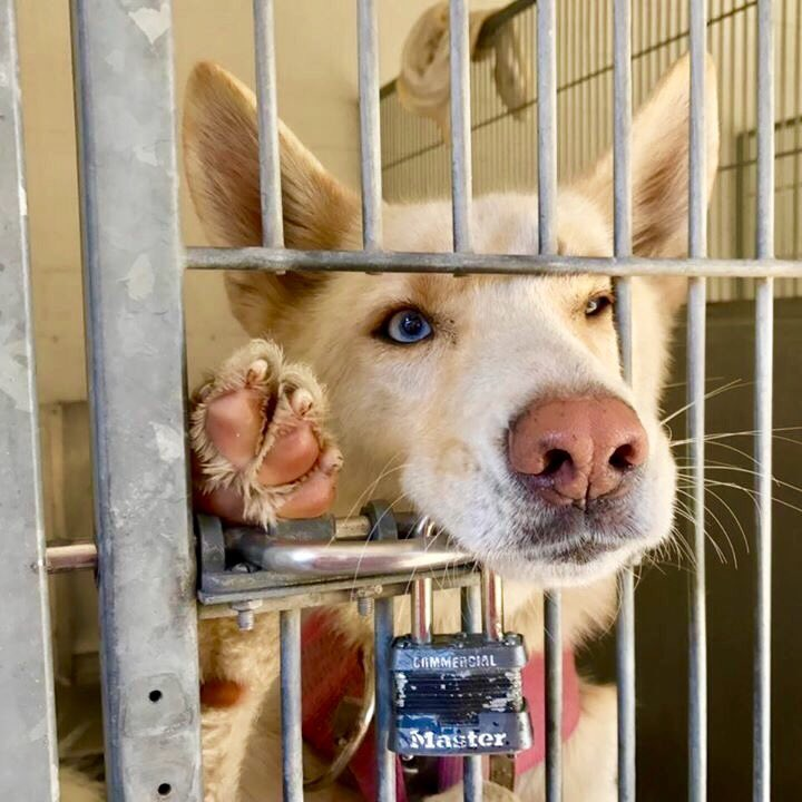 Family pet one minute, locked up & confused the next. Visit your local rescue shelter today & save a life :) #adopt