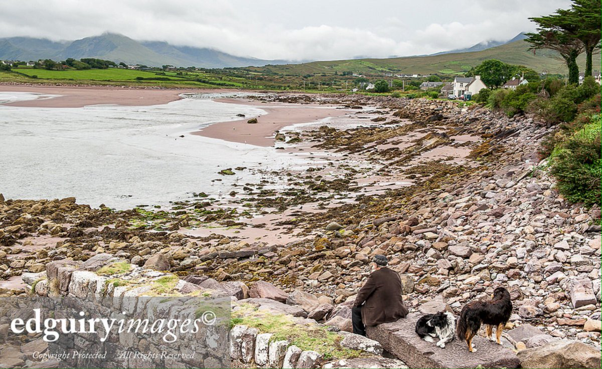 #EdGuiry #Brandon #Dingle #Kerry #Nikon  One Man and his dogs!<br>http://pic.twitter.com/qn92kEDS1N