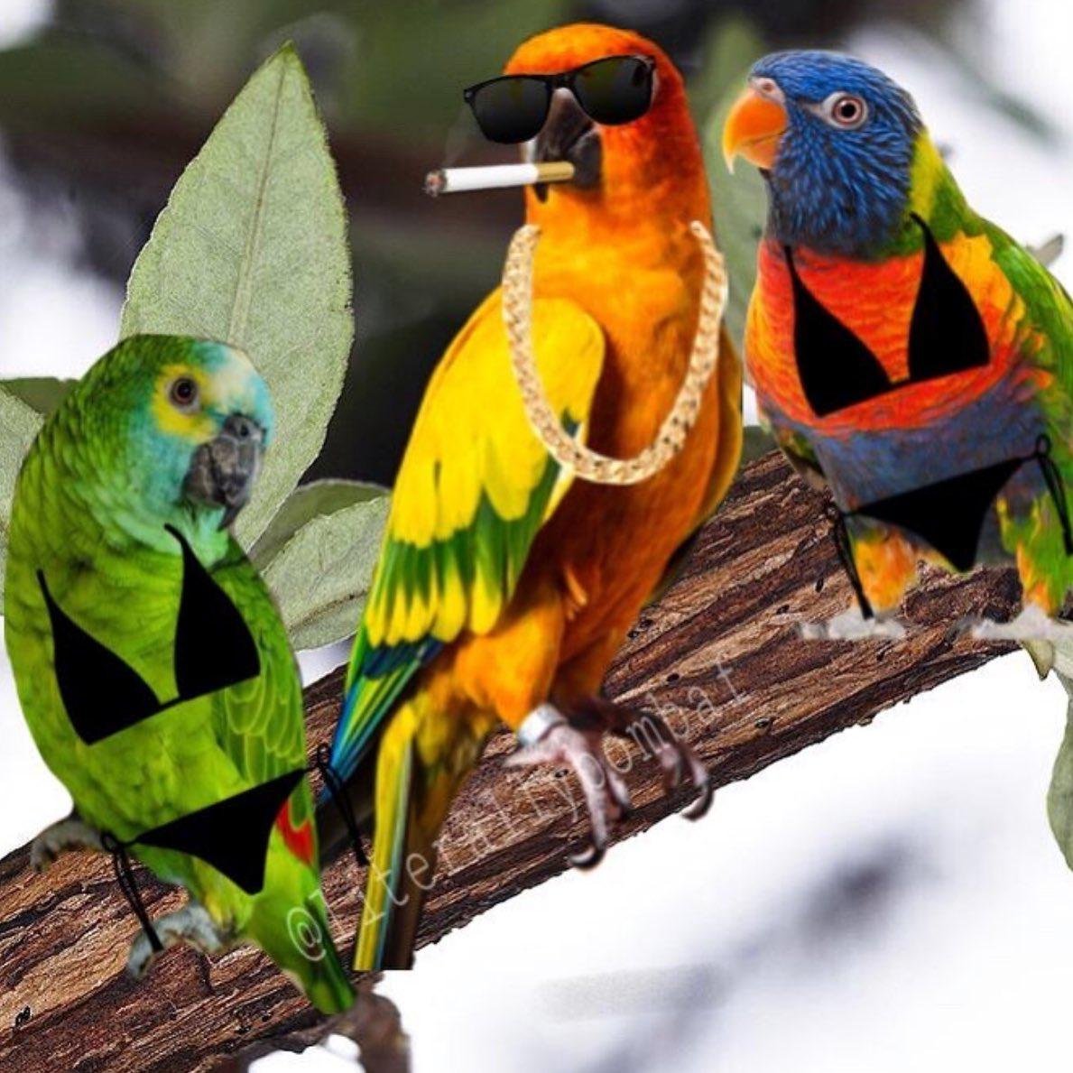 Parrot Image Impremedia Net