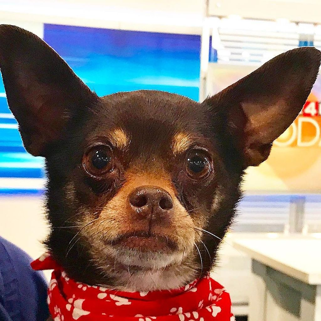   #Dasha is ready for her new home! Call @mhumane at 1 (313) 872-3400.   #dog #dogs