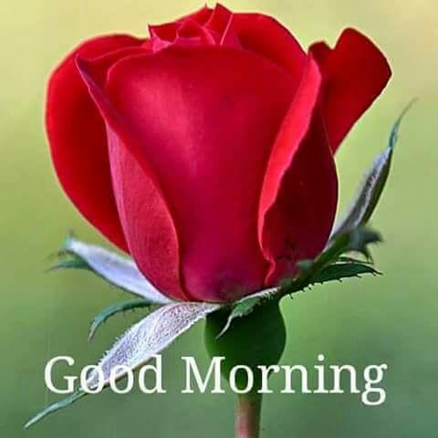 Vinod Kumar Chhibber On Twitter Good Morning Ji Doston