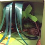 Well done, Antoniel! How many snakes can you find in the rainforest?