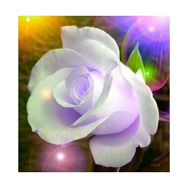 Anod On Twitter Good Night Goodnight Rose Roses Whiterose