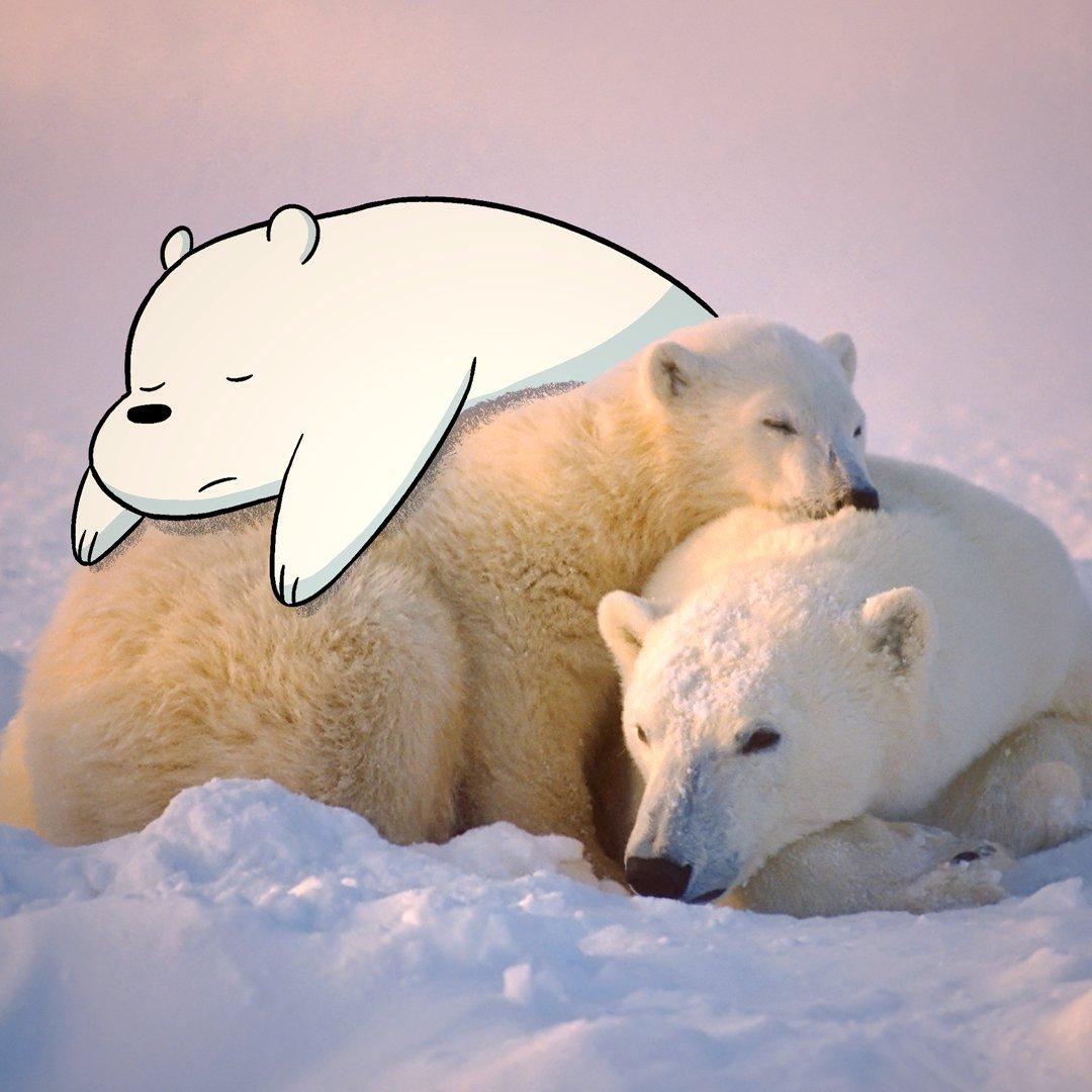 Consider, that nude polar bear clipart