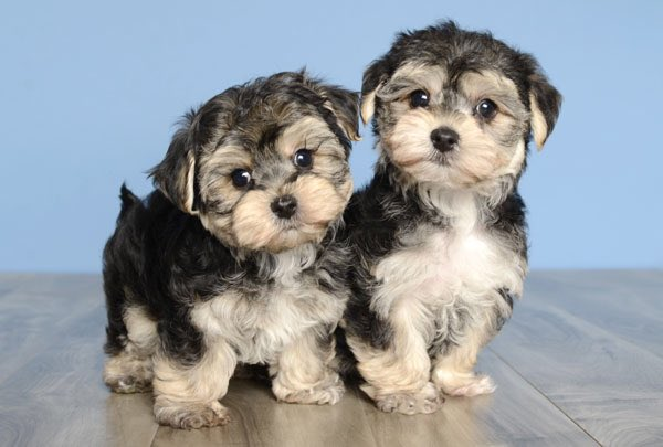 Double trouble #puppies #dogs #cuties<br>http://pic.twitter.com/t0mBkVLogS