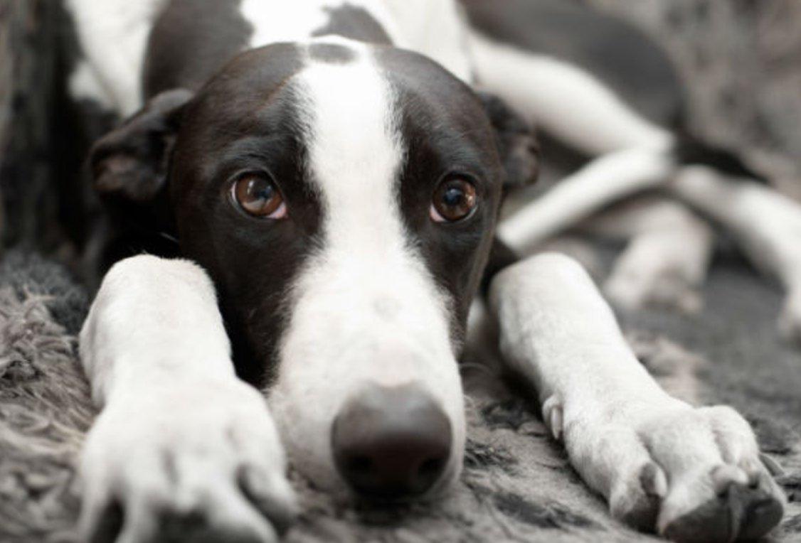 10 human medications most dangerous to #dogs via @akcdoglovers   http:// bit.ly/2lG8U8p  &nbsp;   <br>http://pic.twitter.com/2PLhEnTT89 #realtor