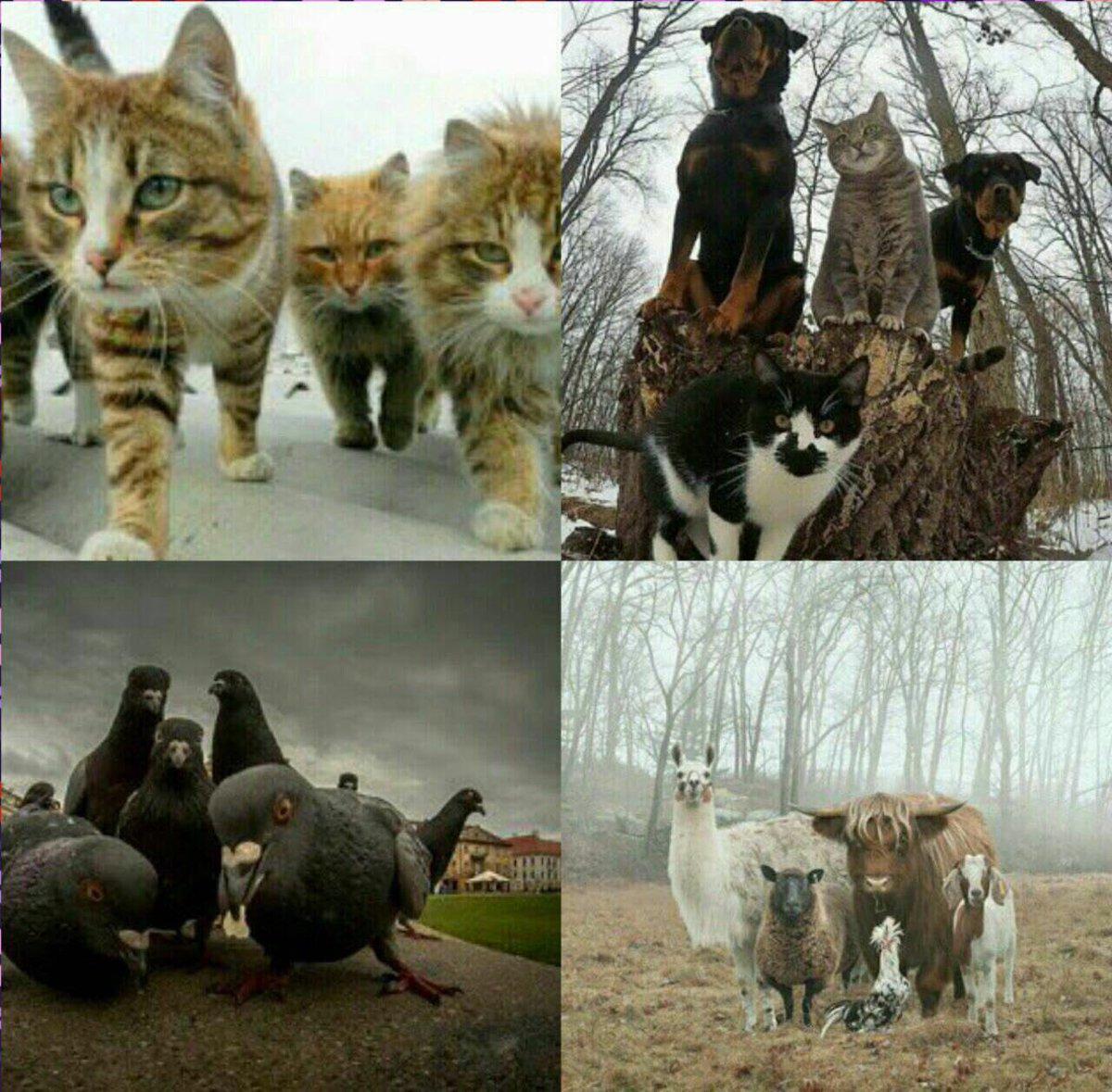 صور جماعيه لحيوانات وكأنها فرقه موسيقيه  تستعد ﻷصدار البومها الجديد !...