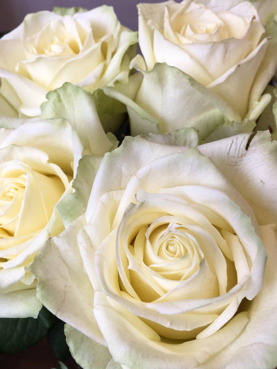 Blue Door Flowers On Twitter Blue Door Favourite Rosa White