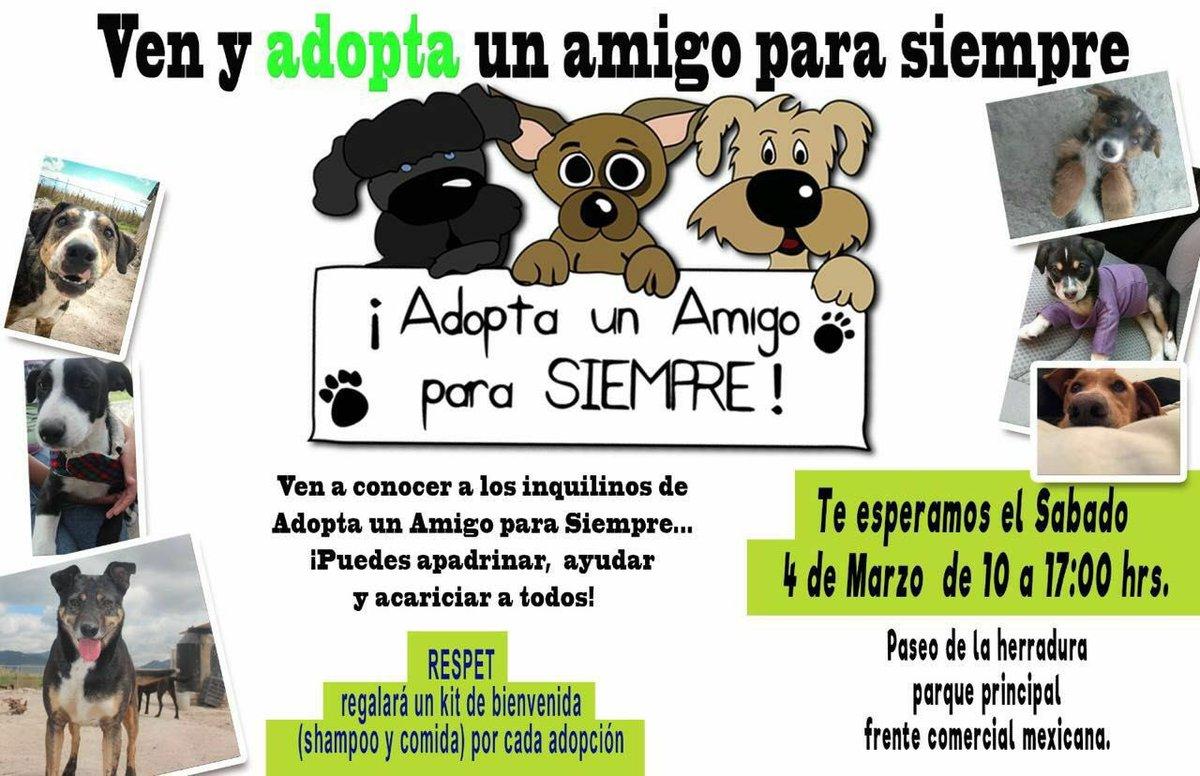 Evento de #adopcion en Paseo de la Herradura #adoptanocompres en #Tecamachalco https://t.co/P8Xv1lGdoE