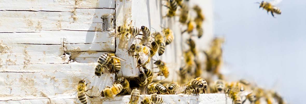 New Minnesota legislation paves the way to protect bees & support farmers!  https://t.co/44cwWB8Izx #pollinators https://t.co/TElbr8DDLi