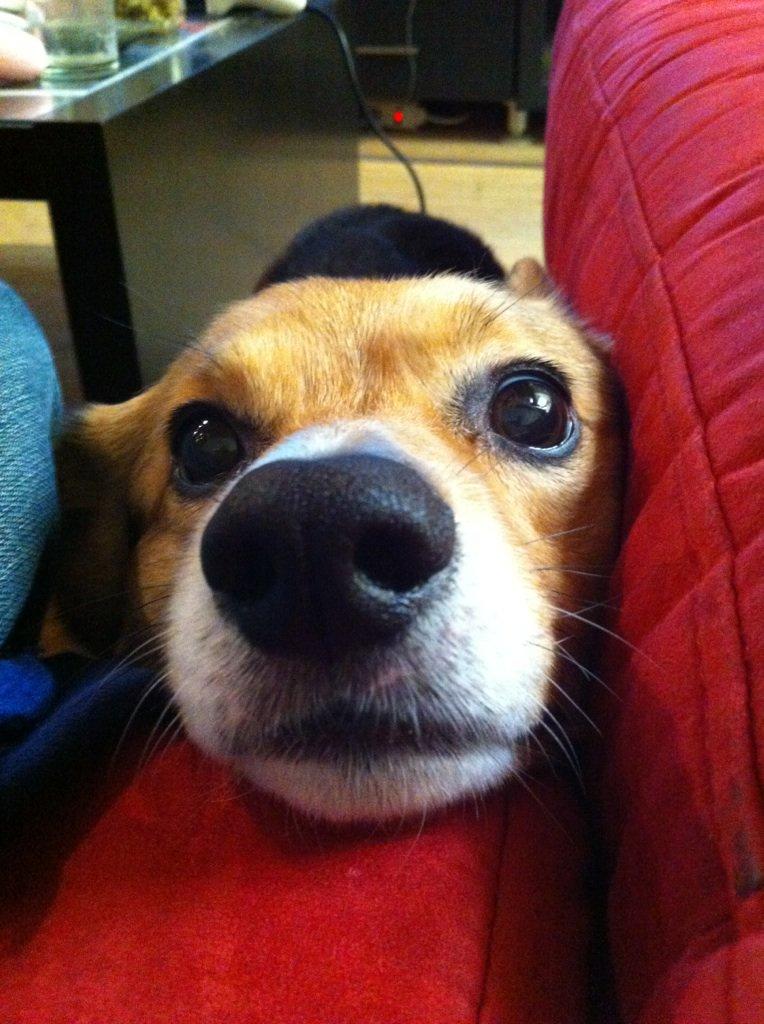 &quot;#pet me pet me pet me pet me pet me pet me pet me&quot; #corgi #dog #dogs #pics<br>http://pic.twitter.com/qvXGbACEok
