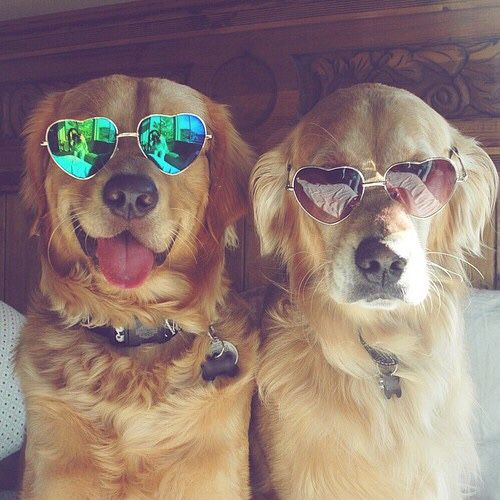 Cool dogs 😍😎