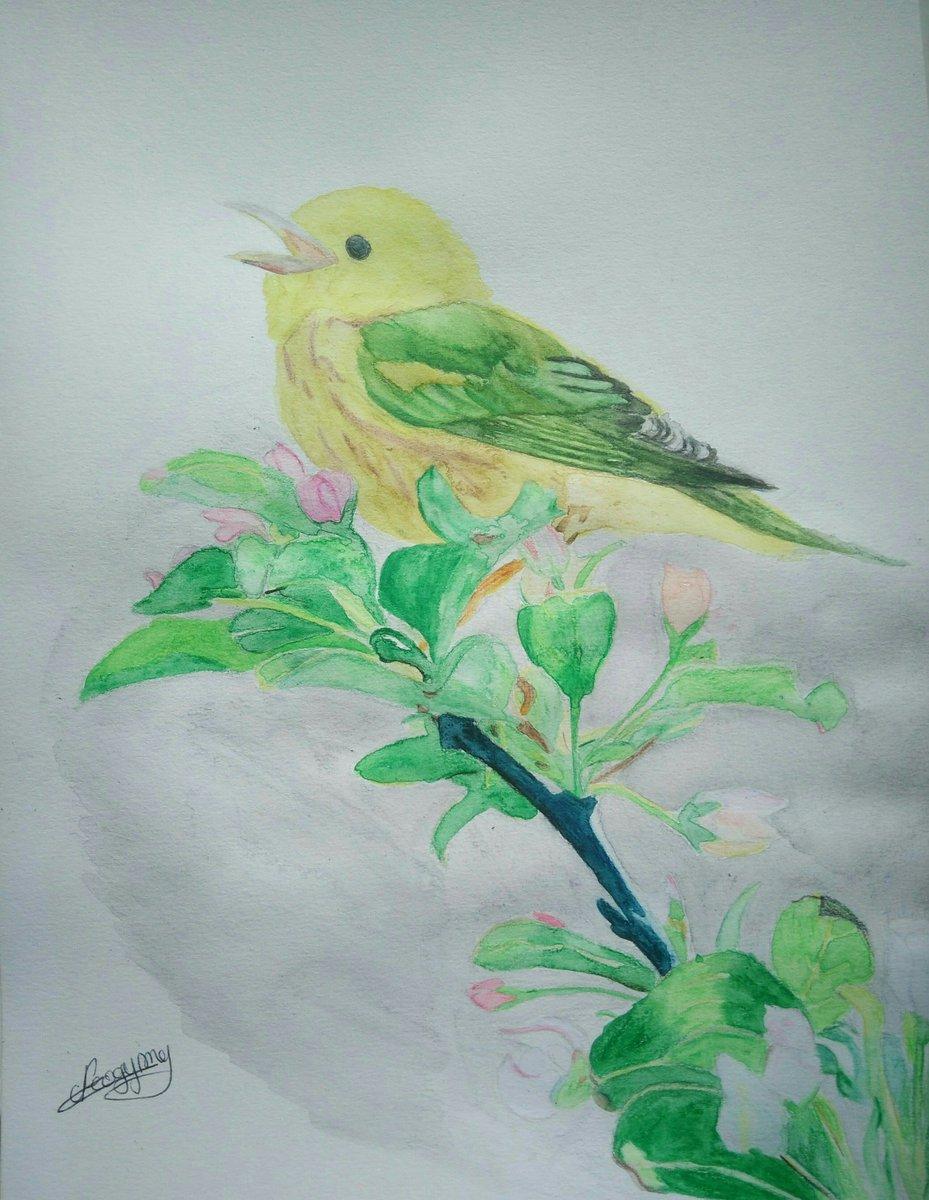 Oiseau terminé ;) crayons aquarellables. #art #drawing #traditionalart #watercolor #bird #flowers #yellow #green <br>http://pic.twitter.com/DZ775vcgXL