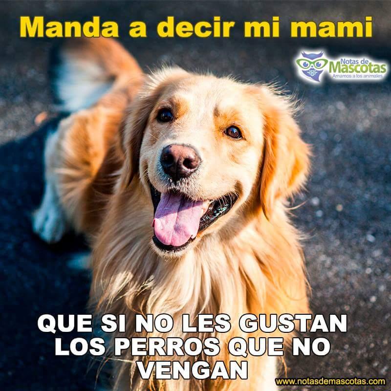 #Feliz martes  #Dog #amigos<br>http://pic.twitter.com/DPHUGNm9zl