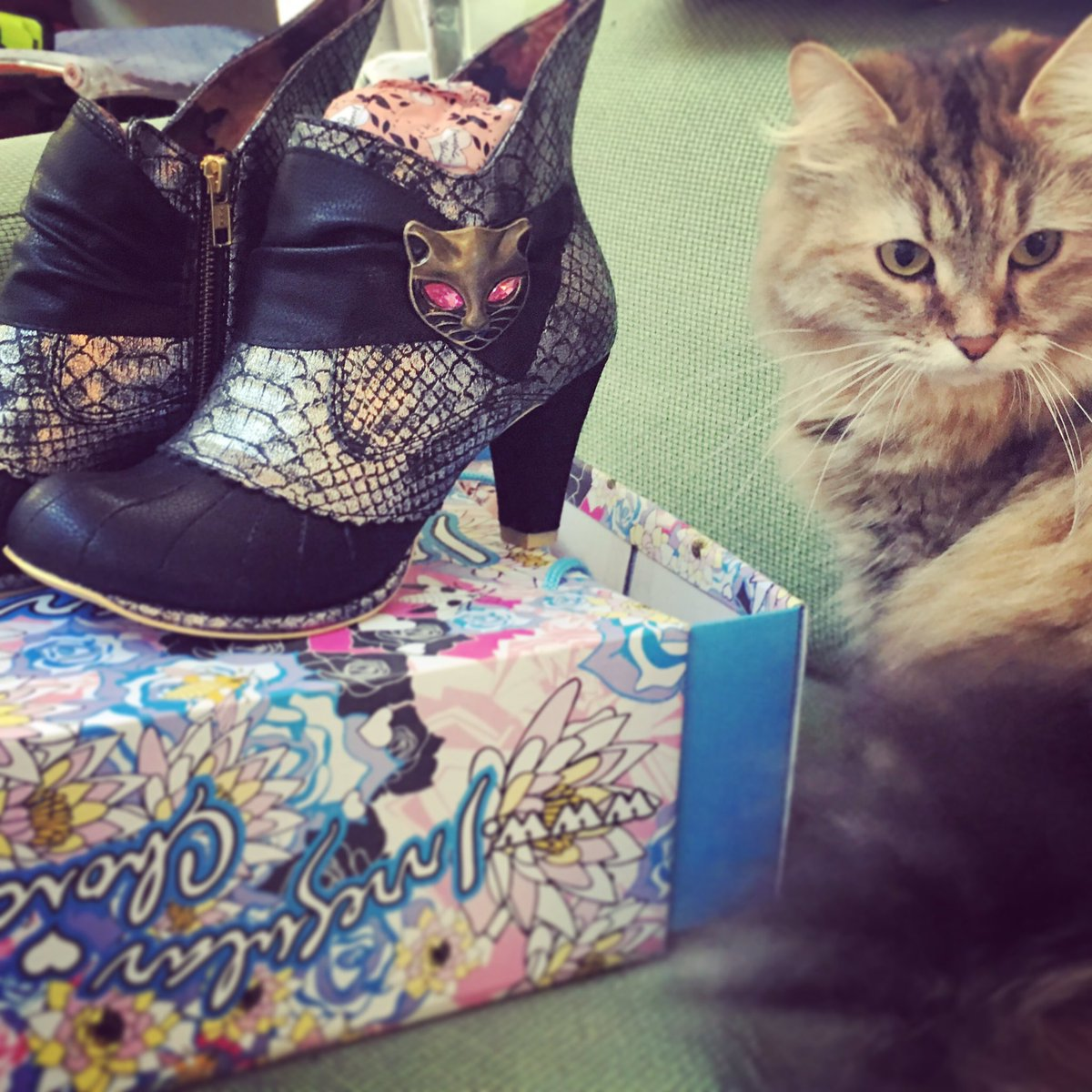 Bobbin has already befriended my new Miaow Boots from Irregular Choice! @IrregularChoice #cats #shoes
