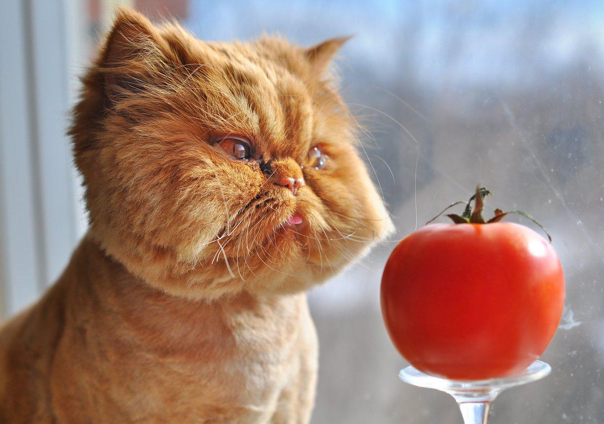 Котенок зевает картинки