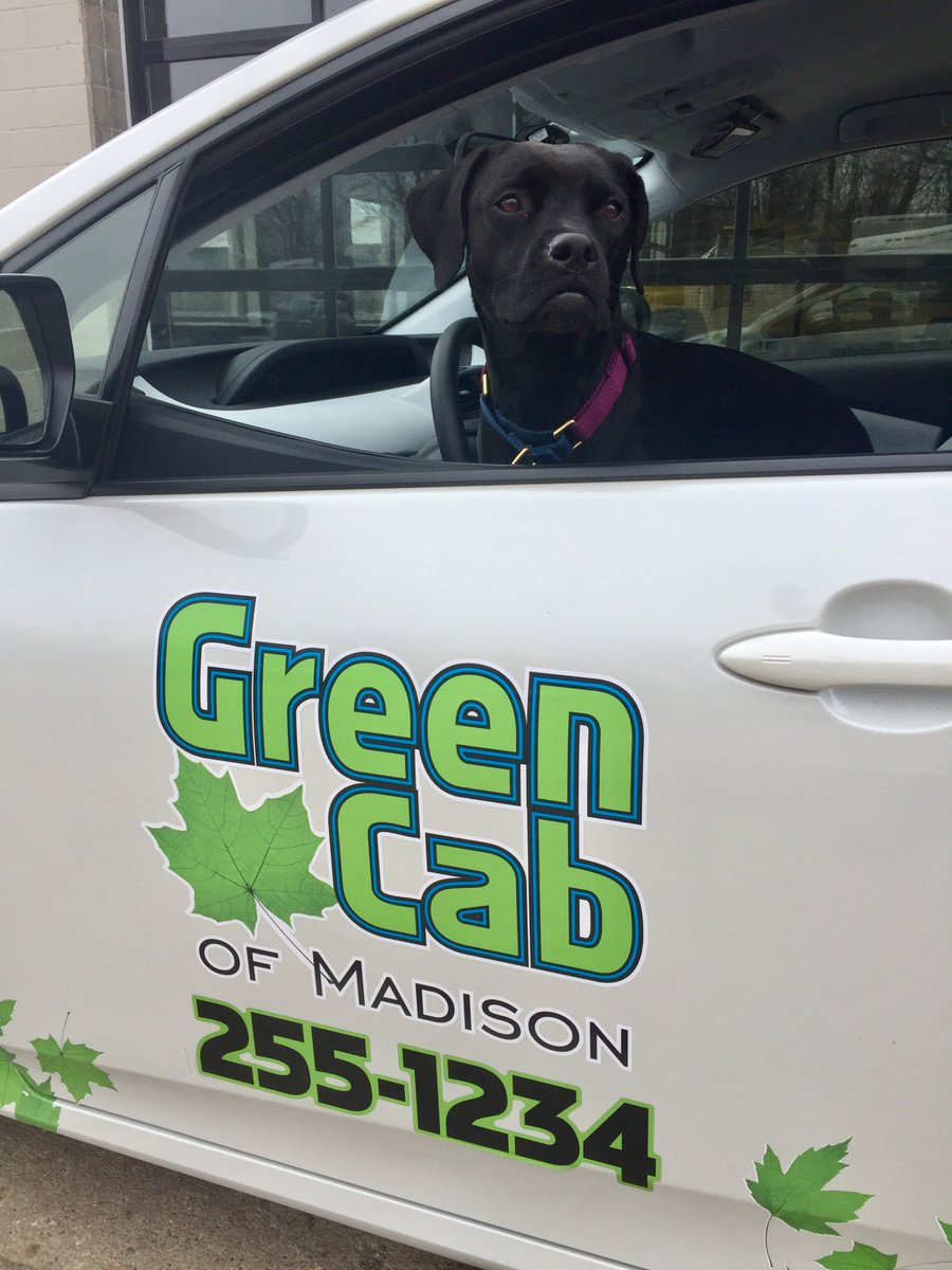 Green Cab Madison >> Green Cab Madison On Twitter Introducing Greencab Mascot Millie