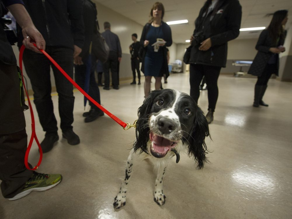 Vancouver General Hospital to add second superbug-sniffing dog after Angus's success https://t.co/3I99r3tjIE https://t.co/zGkx1kPe7z