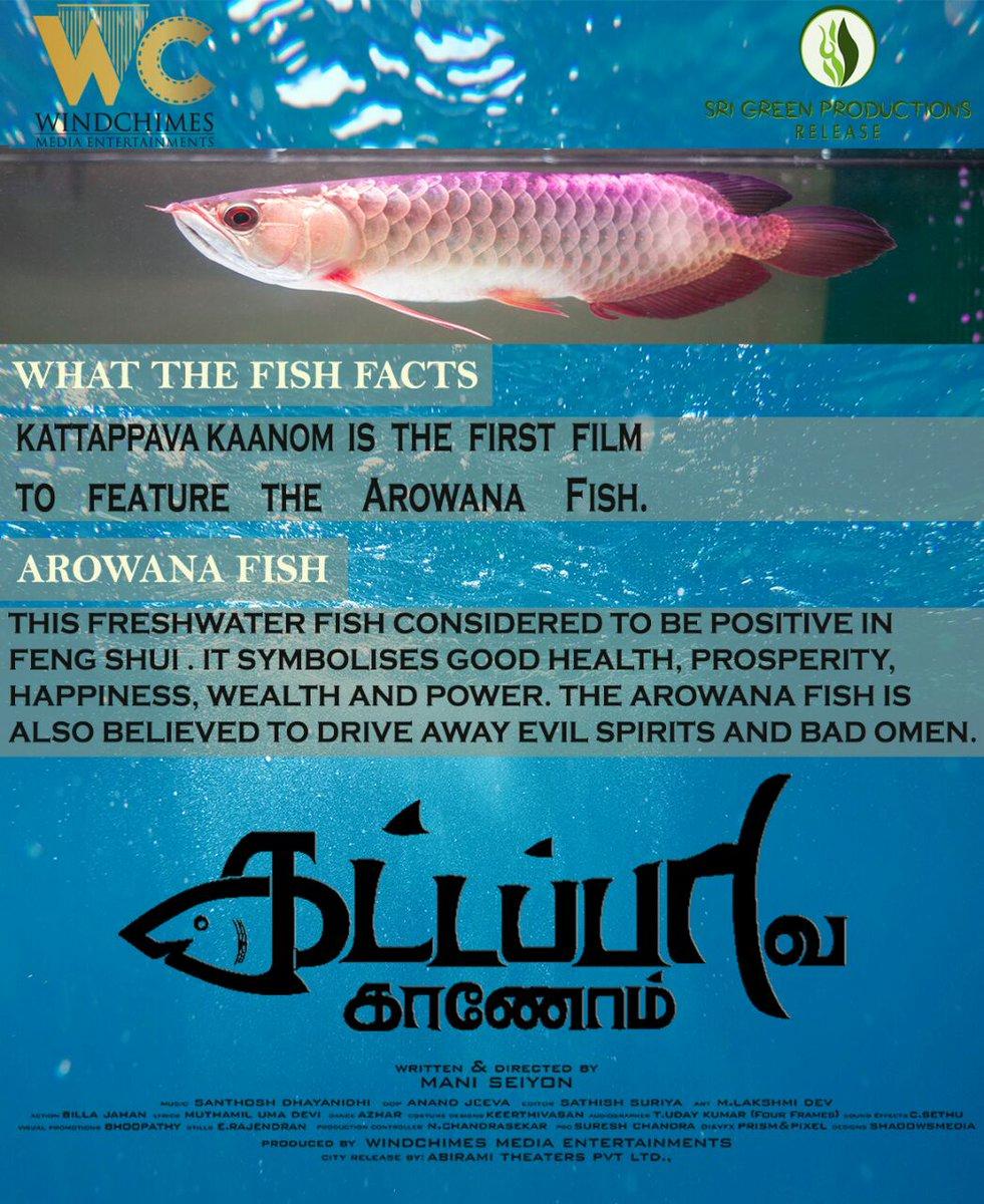 Arowana on for Go fish film