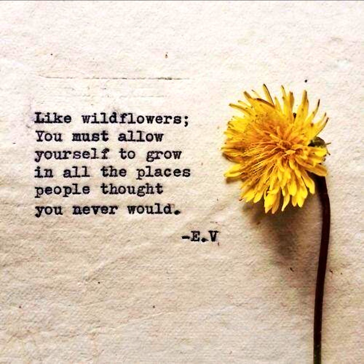 The Counsellors Caf On Twitter Wildflowers You Must Allow