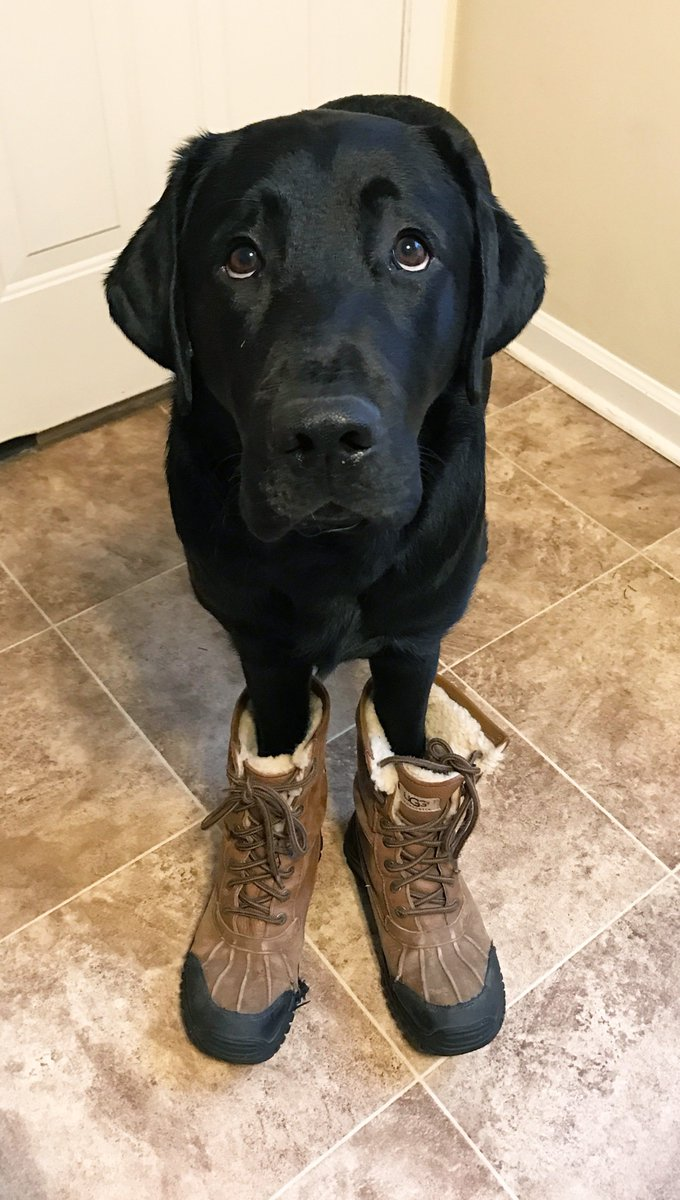 Boots with the fur! #TODAYPuppy #noreaster2017