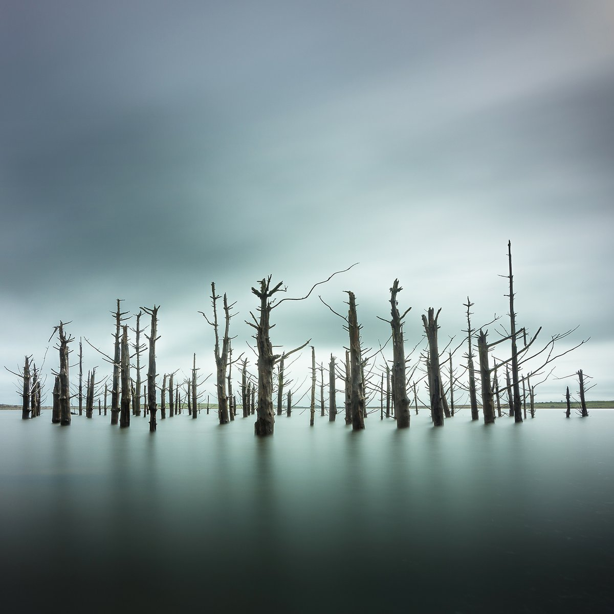 Dramatic deadwood, courtesy of @Nickgreen01Nick. A strong #WexMondays shortlister https://t.co/6gyfa2T3VS