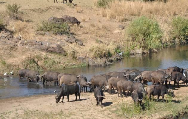 Park Art|My WordPress Blog_View Kruger National Park Foundation  Background