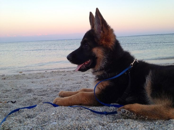 &quot;I started early - took my dog - and visited the sea.&quot; -Emily Dickinson.  The best days in life are the simple ones. #dogs #doglovers <br>http://pic.twitter.com/BQpL8RIvuy