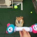 投げるって言ったのにwキャッチできなかった犬の顔が最高